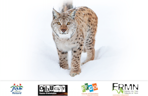 Ain Raid Blanc 2014, sur les traces du Lynx du retord