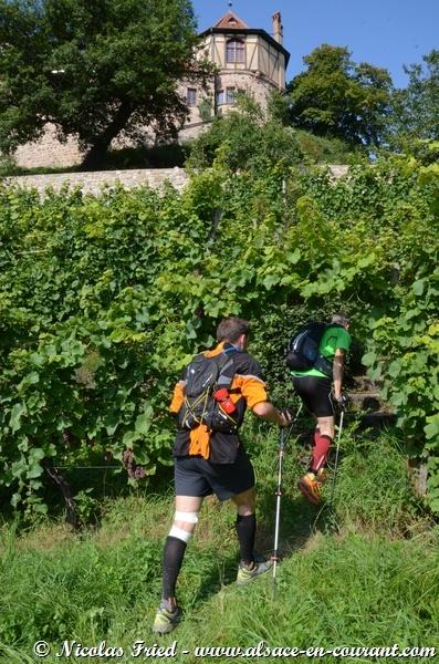 Trail du Haut Koenigsbourg 2014 - 7
