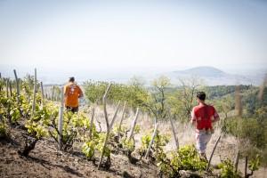 beaujolais challenge trail 2